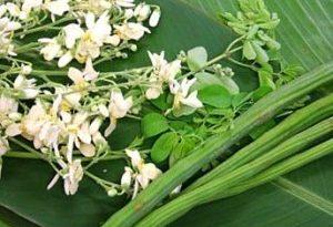 Healthy with horseradish สุขภาพดีด้วยมะรุม