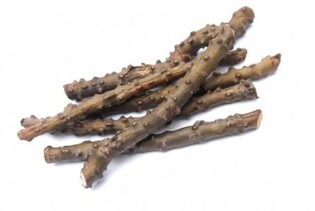 Kmepenya-wormwood บอระเพ็ด ขมเป็นยา